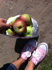 apple picking2
