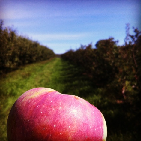 wellwood orchard