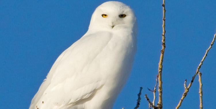 owl slider