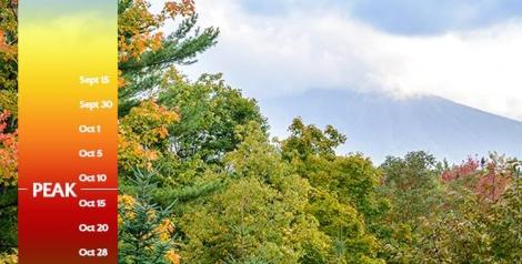 Blog Slider Foliage Report