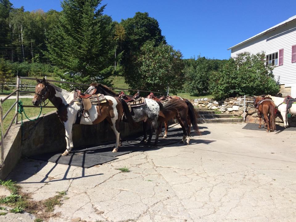 venture vermont horses