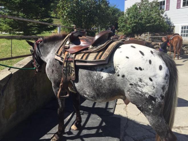 Lauren's horse Cherokee.